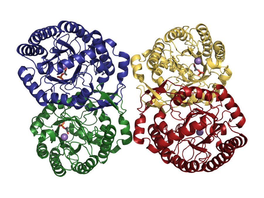 understanding enzymes and the factors that Coenzymes coenzymes are organic molecules that are required by certain enzymes to carry out catalysis they bind to the active site of the enzyme and participate in catalysis but are not considered substrates of the reaction.